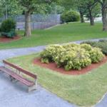 Park Bench and Shrubs